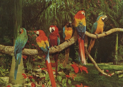 Parrot Jungle, Miami (16)